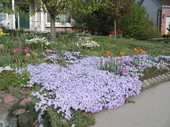 Ground Cover Plants and More as Lawn Substitutes
