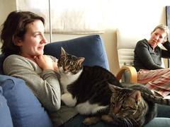 Heidi won't get away this time (stutefish) Tags: cats cute heidi berkeley cardiff carol kitties richter