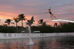 DOLPHINS, SUNSET and the HARMONIE (agusiamilusia) Tags: dolphins isla morada