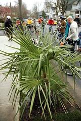 Wintertime Palm Tree Ride