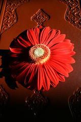 Quran and flower (mehmetakifguler) Tags: flower islam kerim quran koran çiçek qoran İslam kuranı
