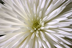I got a Macro lens!!  Woo Hoo (Kathy~) Tags: 3 flower macro taggedout tag2 tag1 tag hero winner cw gamewinner abigfave superhearts photofaceoffwinner photofaceoffplatinum thechallengegroup challengegamewinner pfogold phlow:emote=away fotocompetition fotocompetitionbronze fotocompetitionsilver challengew herowinner