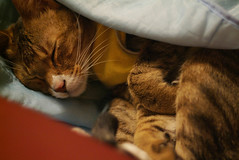 I love you. (Hina :-)) Tags: sleeping baby cute home cat soft adorable kitty sofa sleepy blanket jumper hina tender monkie maomao