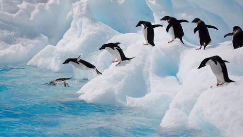 Antarctica 2007 - 0489
