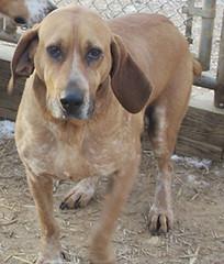 rescue orange pets dogs senior animals virginia hound volunteer adopt sanctuary donate nokill rikkis rikkisrefuge orangecountyanimalshelter