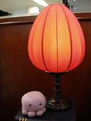 momo under the lamp I