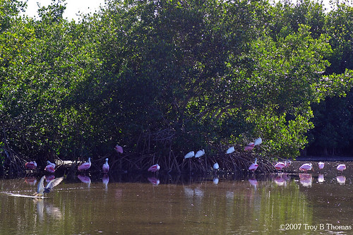 Mangroves; Photography by Troy Thomas