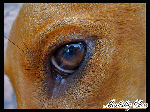 nuska eye