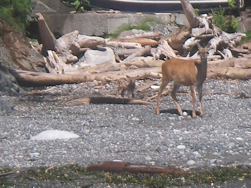 Deer and Baby