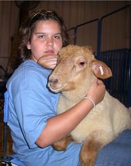 Lap lamb