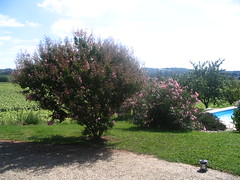 Beautiful garden, St Sabine, Dordogne, France