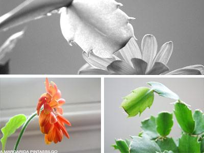 a botanica de casa