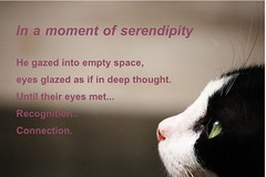 S e r e n d i p i t y (toffeespin) Tags: cat d50 fur paw feline poetry poem tabby tail whiskers meow serendipity  puss photobyvive