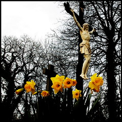 Thanks for the flowers (Maerten Prins) Tags: flowers graveyard yellow christ religion jesus daffodil geel daffodils bloemen christus narcissus narcissen kerkhof 10faves abigfave