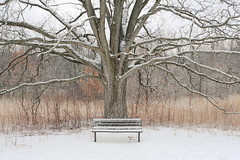 Embracing Emptiness (Mingfong) Tags: park winter white snow bench waiting snowy story madison albumcover owen stories      mingfong musicflyer  mingfongjan   artbrochure  sketchoflight mingfongphotography