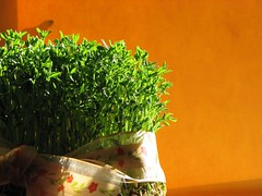 Happy New Year (nedasta) Tags: orange green interestingness spring explorer newyear norooz norouz persiannewyear haftseen 7seen  1386