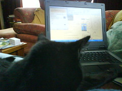 Sally likes to Blog