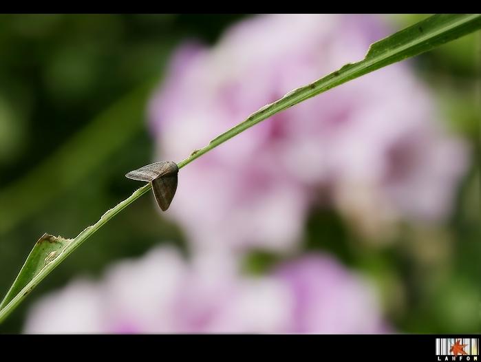 花草間美麗的邂逅