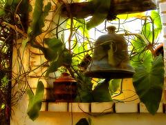 Enredada.... (*atrium09) Tags: travel bravo venezuela olympus campana falcon coro e330 splendiferous supershot 10faves outstandingshots atrium09 mywinners abigfave impressedbeauty superbmasterpiece rubenseabra fiveflickrfavs