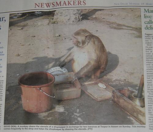 Monkey Butler.JPG