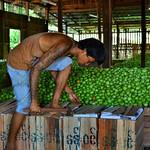Nyaung Shwe, Tomatenlagerhaus