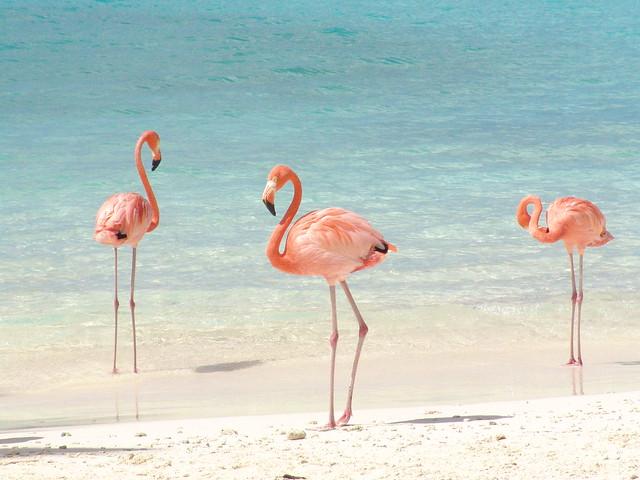 Flamingos vermelhos de sol