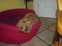 Bailey Dec 2006