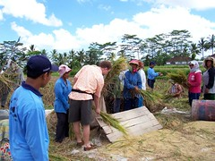 Al working with the ladies in the Rice Paddies