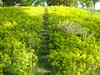 flower stairs (xonyourairplanex) Tags: bestnaturetnc06