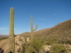desert moon (mwaters) Tags: tucson saguaronationalpark