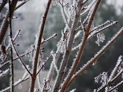 Icy Branch (Sara.E) Tags: morning winter ice nature weather geotagged idaho bestnaturetnc06 bestinnaturetnc06