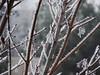 Icy Branch (Sara.E) Tags: morning winter ice nature weather geotagged idaho bestnaturetnc06 bestinnaturetnc06