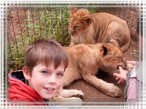 Codey petting the lion cubs.