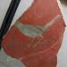 Fragment de fresc: ocell