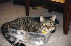 Boxed Bonnie