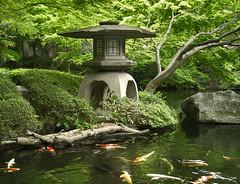 Japanese Garden (NatashaP) Tags: japan garden tokyo japanesegarden explore koi   lantern interestingness9 happoen magicdonkey challengeyouwinner gickr aplusphoto favoritegarden photofaceoffwinner platinumheartaward a3b pfogold