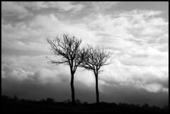 B&W trees (andybvrs) Tags: winter light england sky bw cold tree topf25 clouds canon dark 2006 eos350 aplusphoto andybvrs treesubject