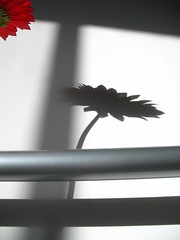 flower shadow (beijinger) Tags: china winter shadow red flower home photography photo bed beijing picture  hutong  simple yangcheng p1f1 beijinger