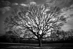 January (deatonstreet) Tags: winter white black tree landscape kentucky branches louisville