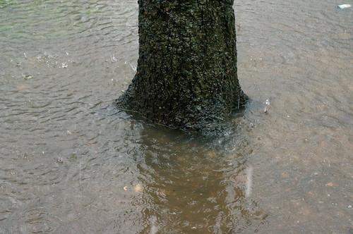 tree under water.