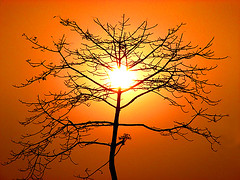 Stripped bombax tree silhouette (Felix Francis) Tags: sunset sun india tree nature beautiful scenery asia colours forestry kerala environment thrissur aesthetic sillhoutte