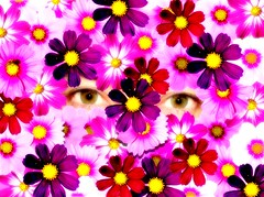 The world through my eyes (aussiegall) Tags: flowers contrast eyes highkey cosmos beautyisintheeye instantfav impressedbeauty