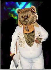 Elvis the ewok