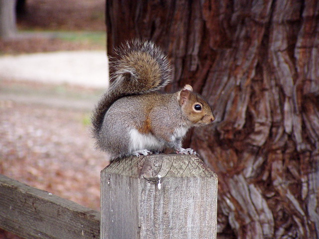 PLEASE HELP SAVE THESE SQUIRRELS by pipercat99