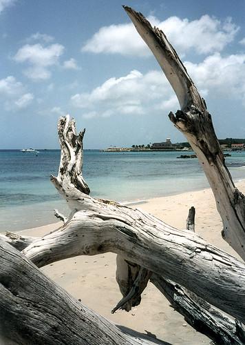 Barbados Driftwood