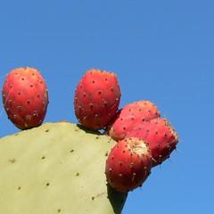 Spiky Pinky Fruits