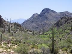 Gates Pass (1) (AntyDiluvian) Tags: arizona cactus mountain southwest museum desert tucson pass sagu
