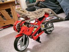 Spike's Bike
