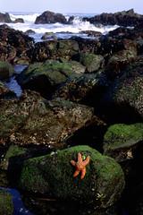 Tide Pool Scene (ryannicholasjones) Tags: ocean blue orange green marine starfish tide tidepools tidepool tidal abalonecove