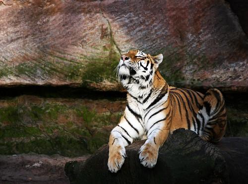 Tierpark13